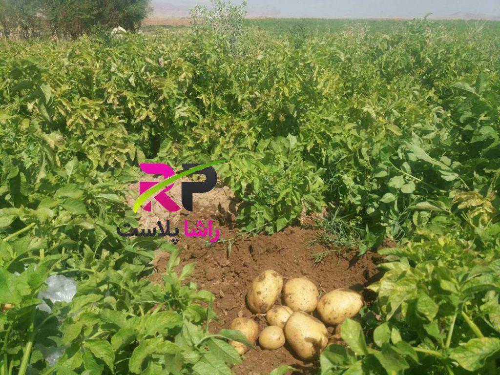 فروش گونی تور سیب زمینی
